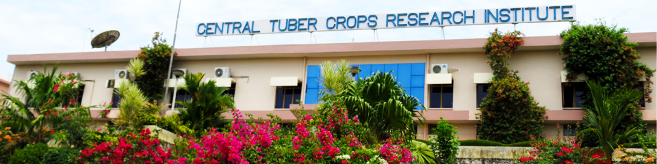 ICAR-Central Tuber Crops Research Institute | Thiruvananthapuram
